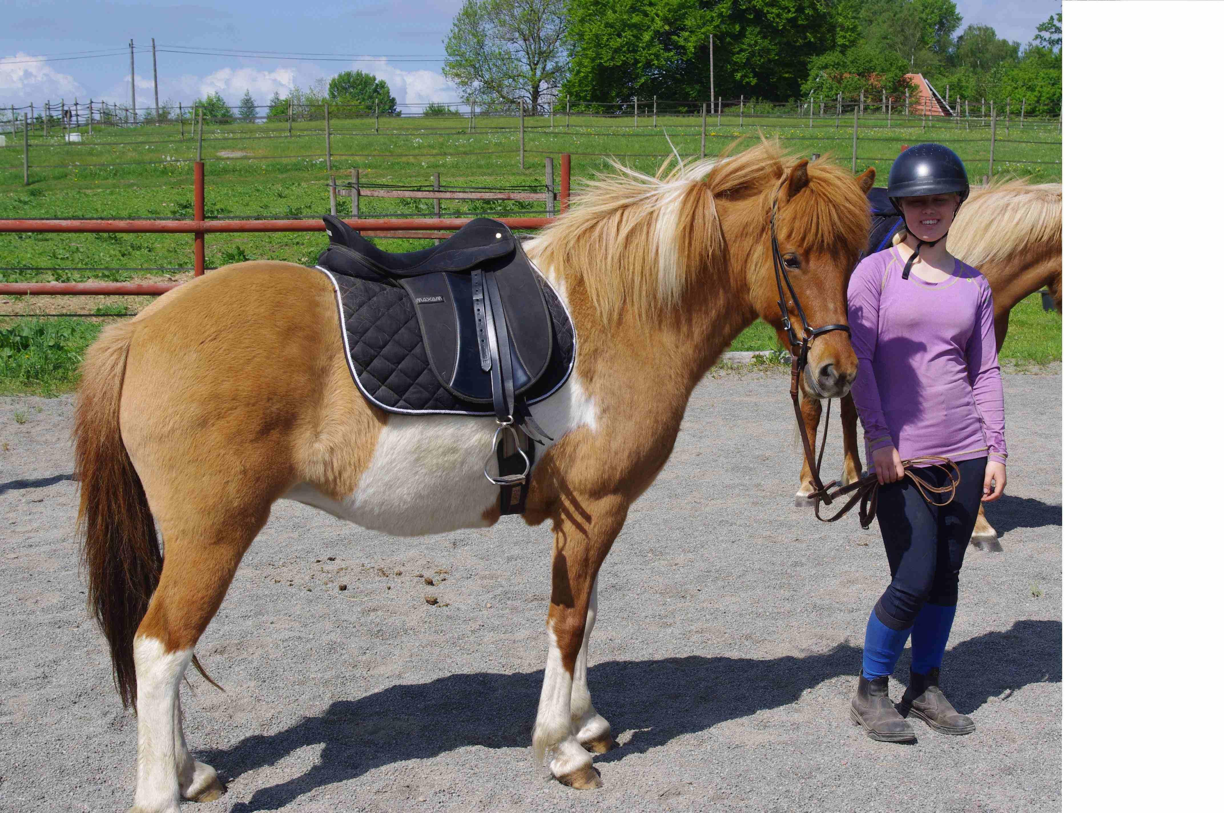 Olga2 Our horses-sparrarpislandshastar.com | 2020
