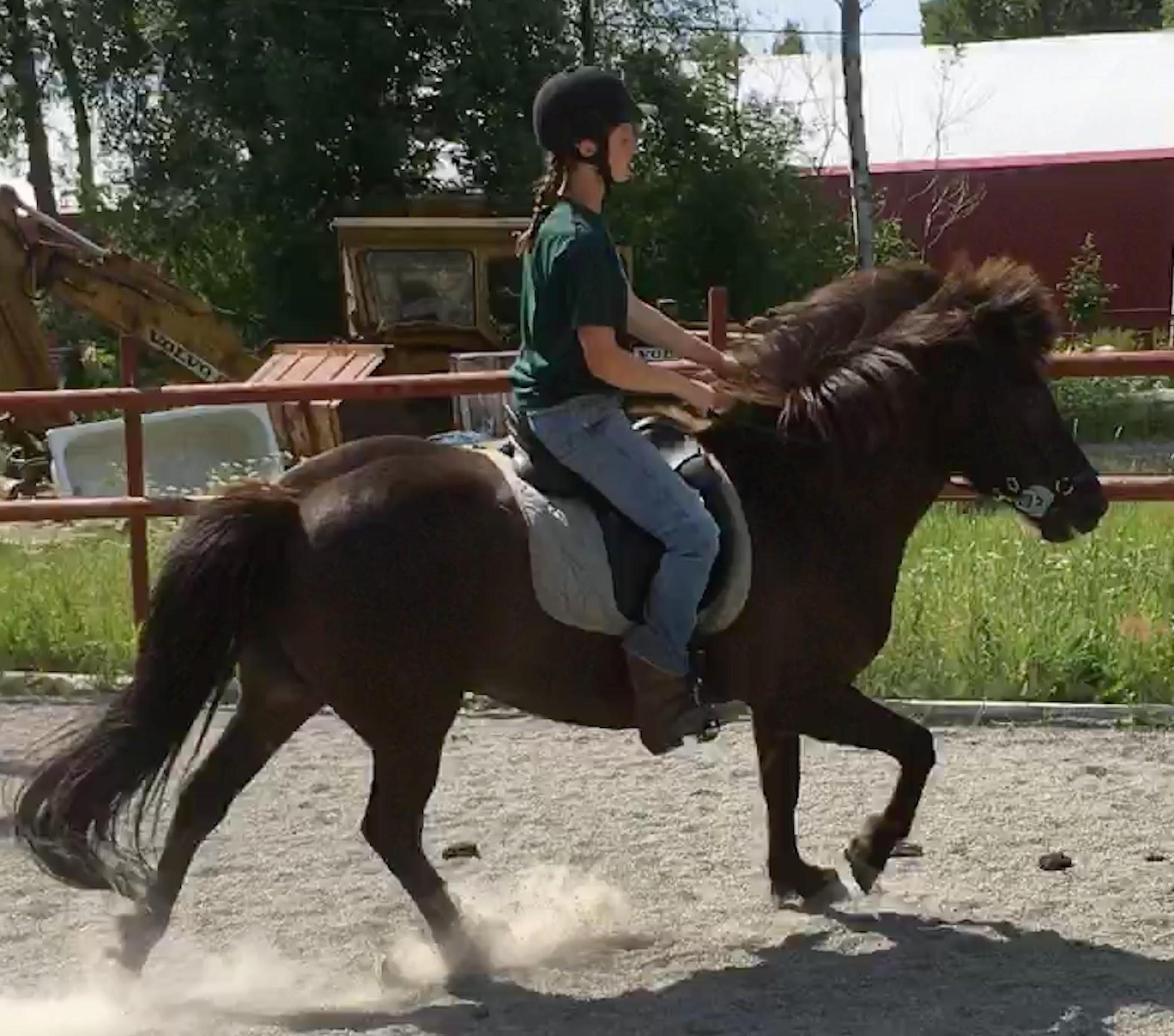 flea Our horses-sparrispislandshastar.com | 2020
