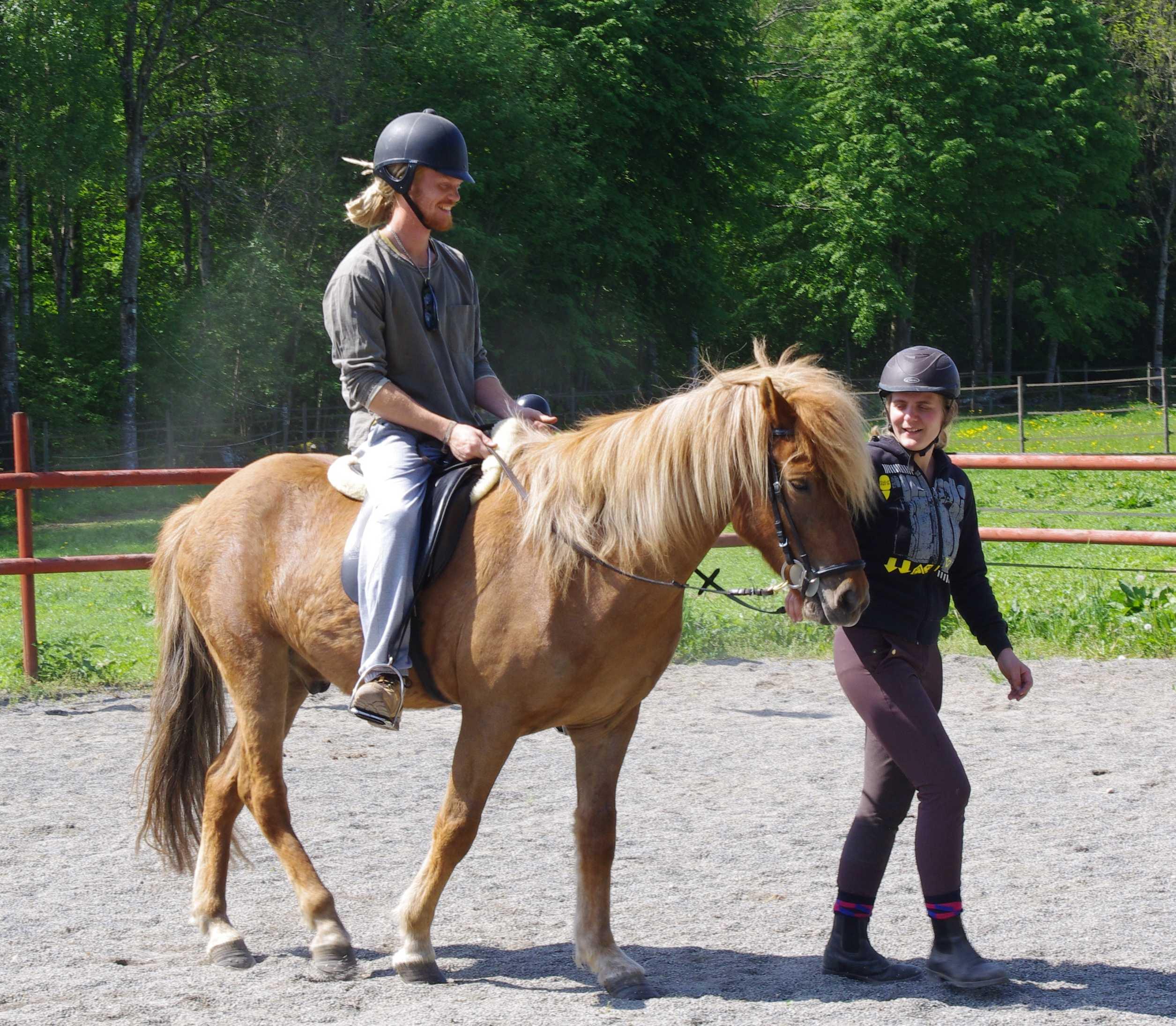 teaching_nw_rider Ridskola-sparrarpislandshastar.com | 2020