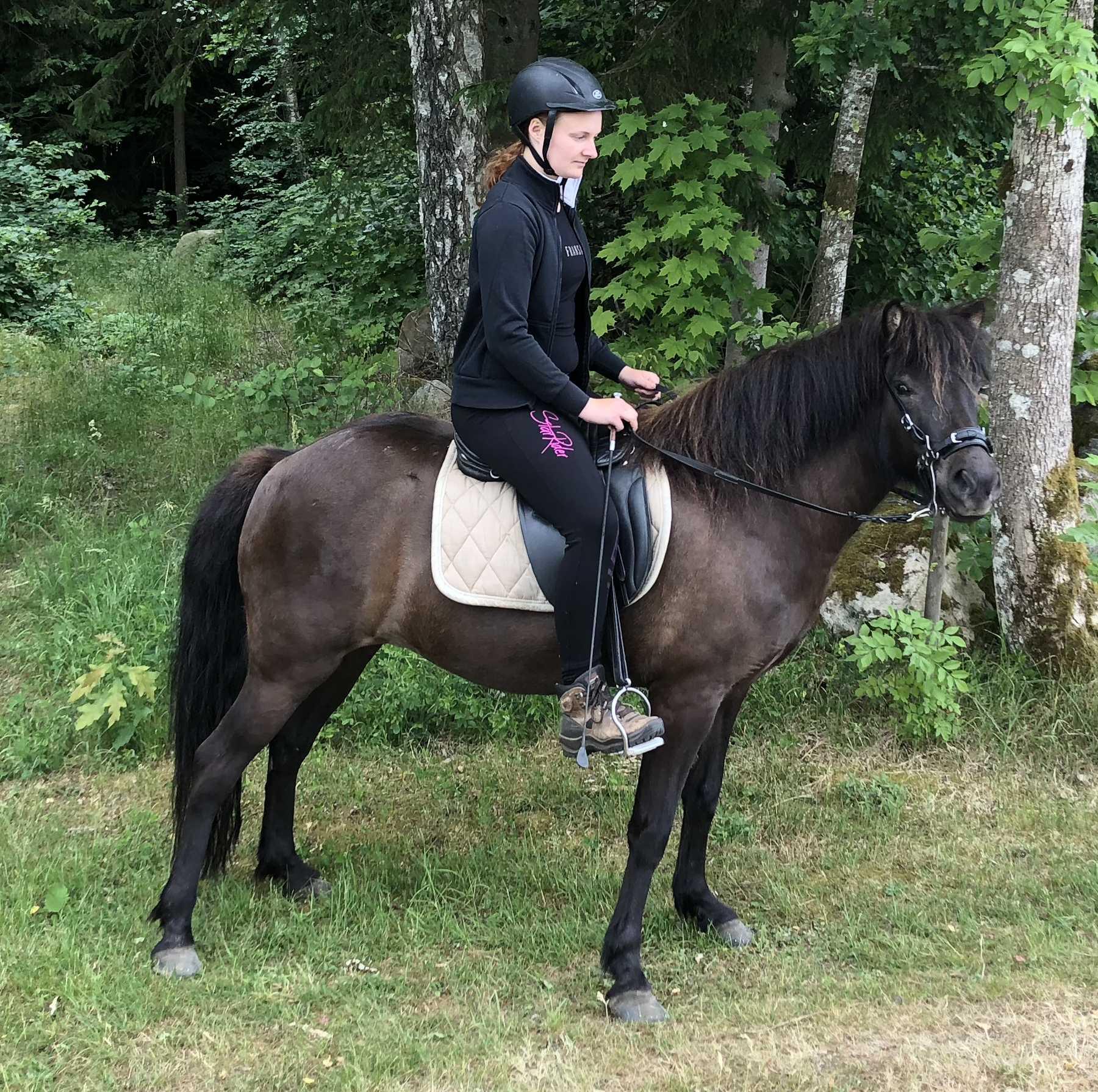 tomalina Our horses-sparrispislandshastar.com | 2020