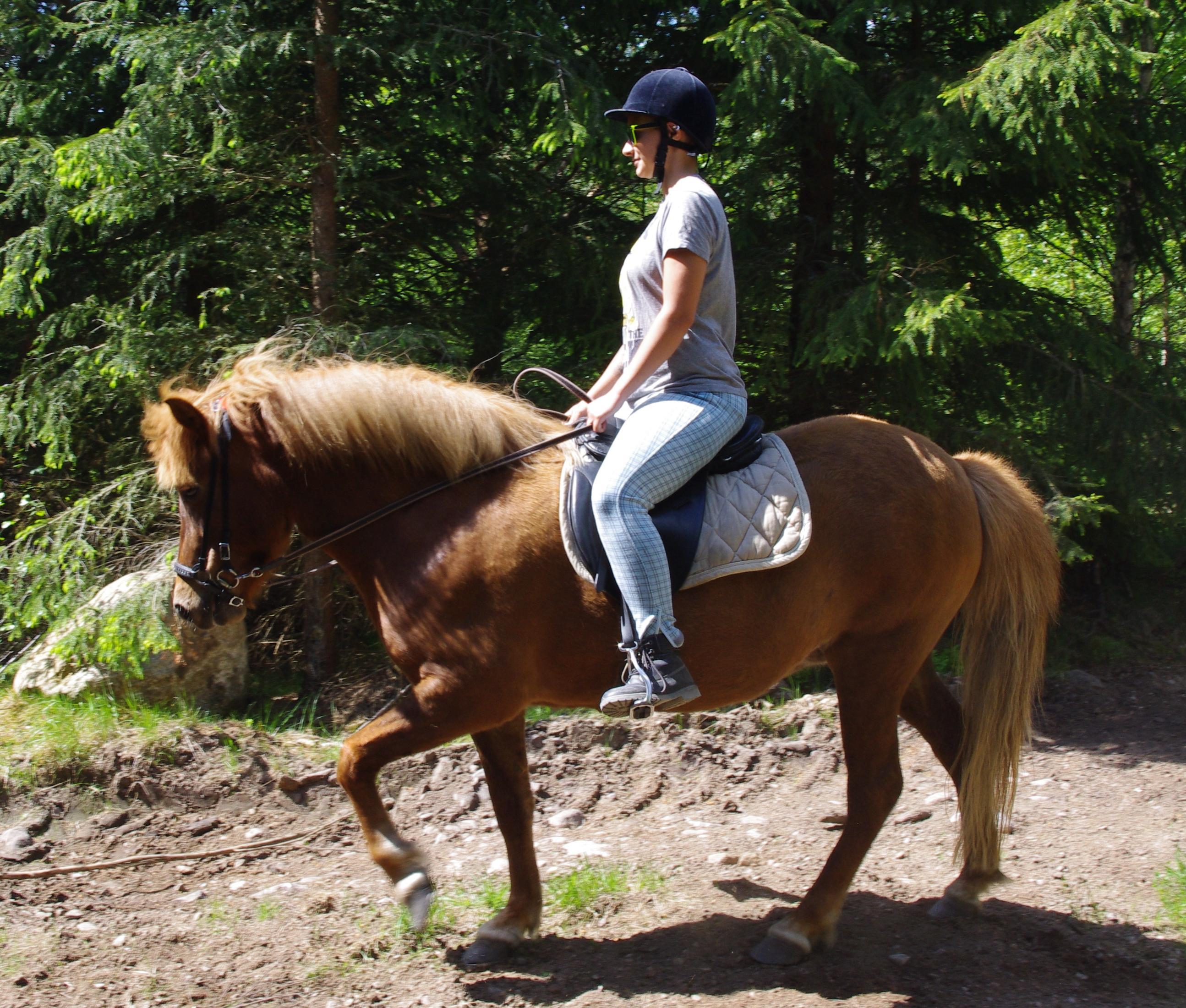 tyra_rid_ut_ Our horses-sparrarpislandshastar.com | 2020