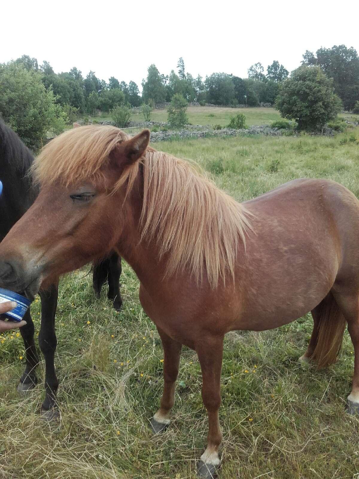 winken Unsere Pferde-sparrarpislandshastar.com | 2020