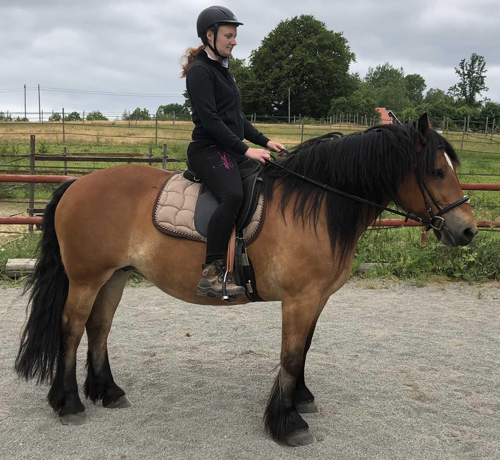 Eines unserer Pferde-SparePislandHastar.com | 2020