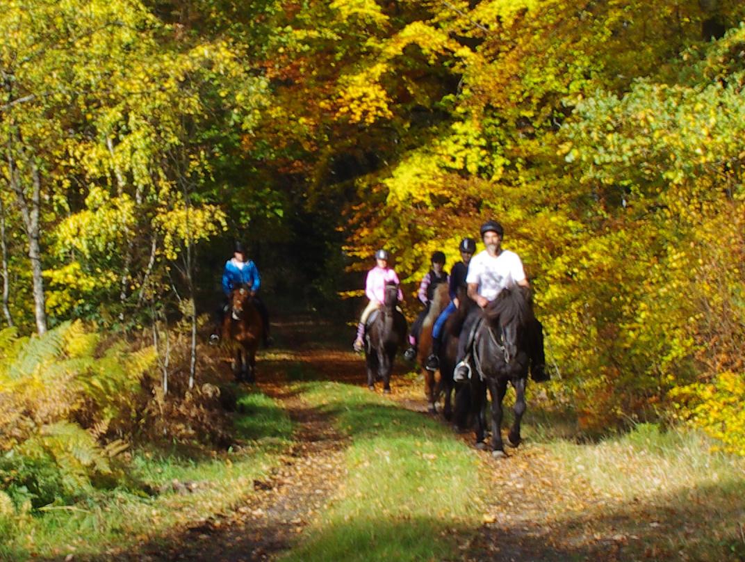5-Horse-Rid-Autume2 Galleri-sparrarpislandshastar.com | 2020