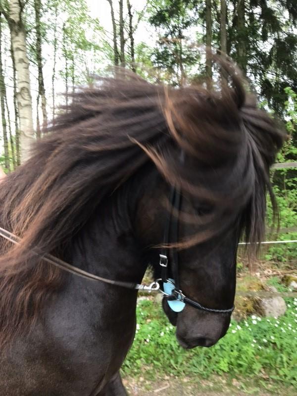 bild2 Unsere pferde-sparrarpislandshastar.com | 2020